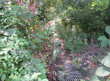Identifying Poison Ivy and Preventing Contact